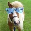 Profilbillede for 'Hestepigen'