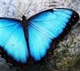 Profilbillede for 'Papillon'