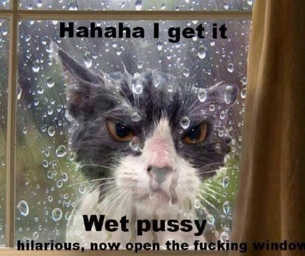 Causes of wet vaginas on cats