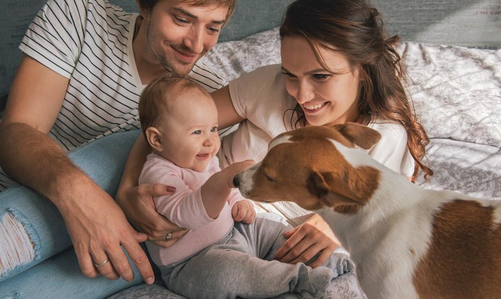 8 gode råd: Sådan introducerer du baby for din hund