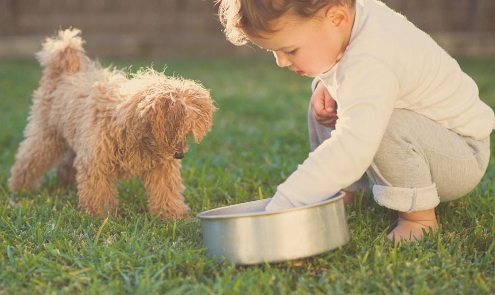 14 børnevenlige hunderacer